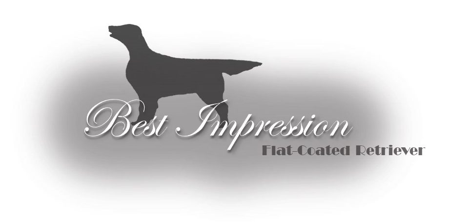 KENNEL BEST IMPRESSION – Flat Coated Retriever